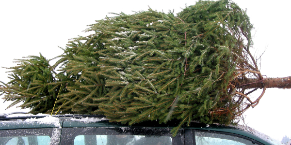 Christmas Tree on Roof of Car