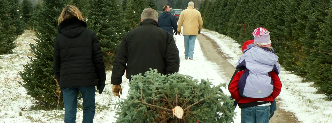 Family Bringing Christmas Tree to Car