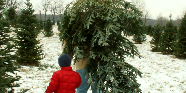 Father and Son Carrying Christmas Tree
