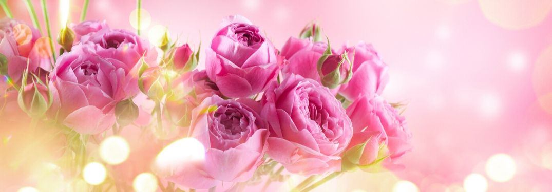 bunch of pink roses on pink background