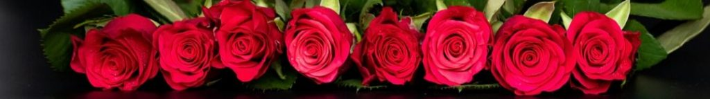 thin row of roses on black background