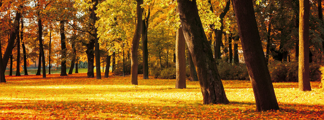 A stock photo of a forest during the fall after the leaves have changed.