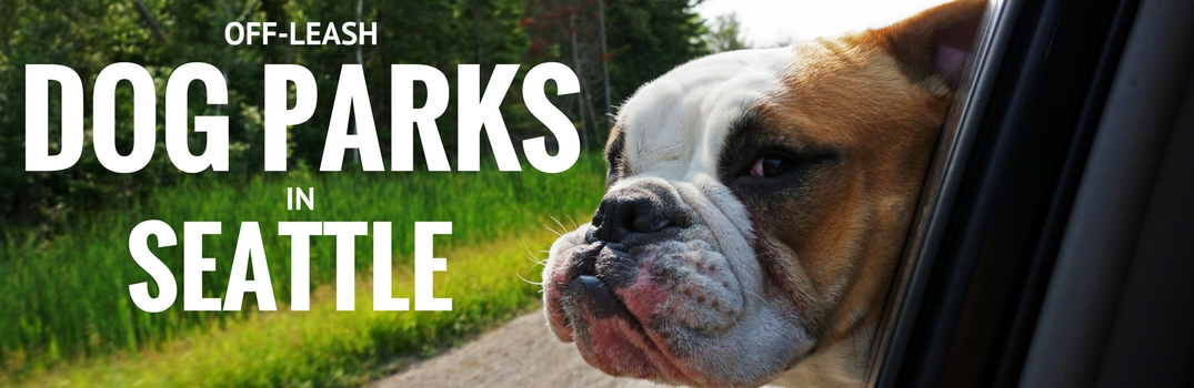 Off-Leash Dog Parks in Seattle WA