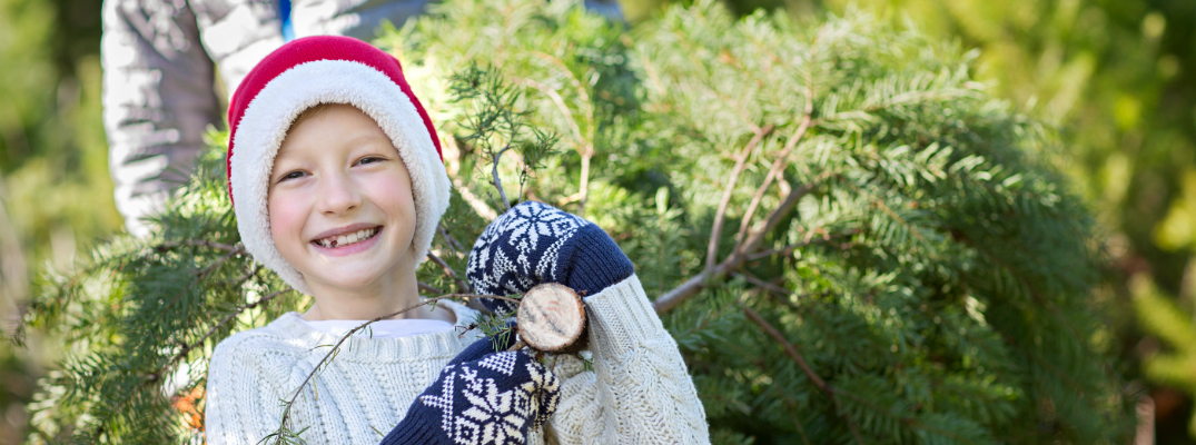 Young Girl Carrying a Christmas Tree