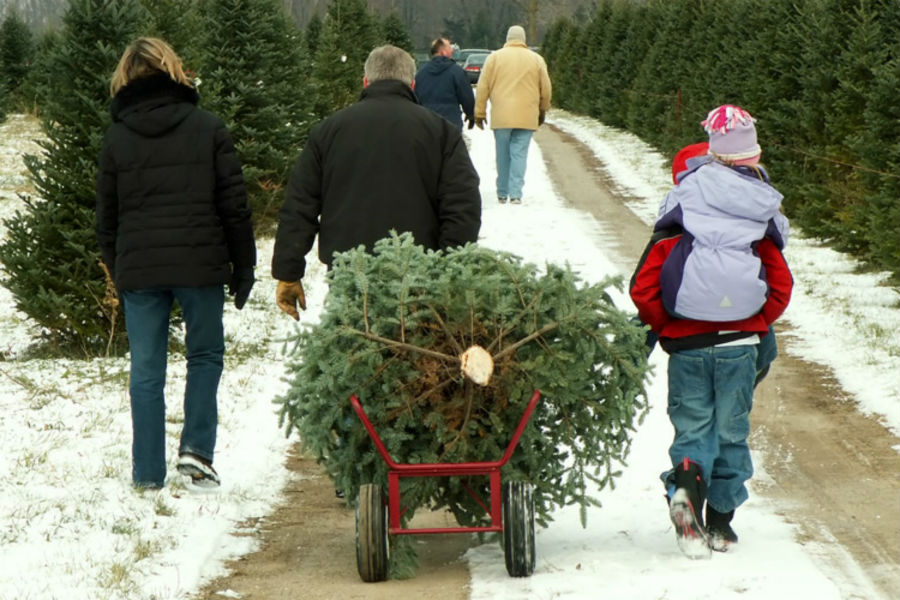 Family Picking Out Christmas Tree_b - Mercedes-Benz ...