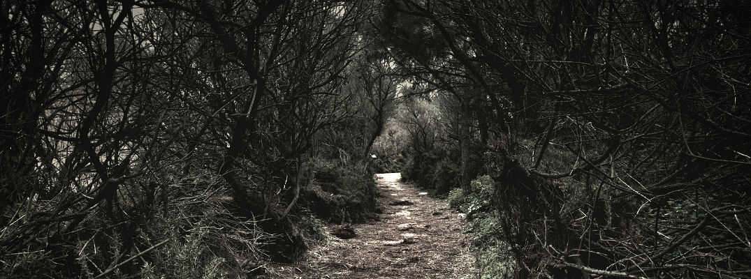Deserted trail through forest