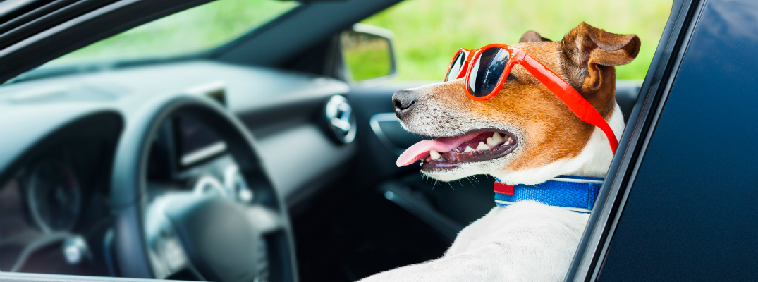 3 Tips For Keeping Your Pets Safe in Hot Weather Driving