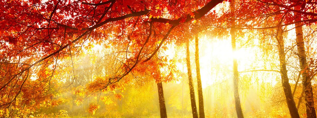 A stock photo of a forest in full color change mode.