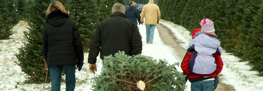 Family dragging a Christmas tree at a Christmas tree farm