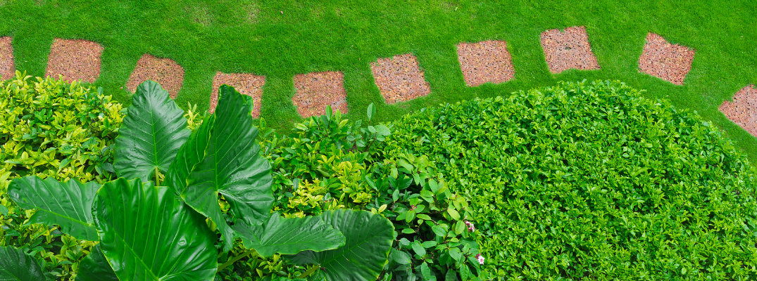 Pathways with green lawns, Landscaping in the garden