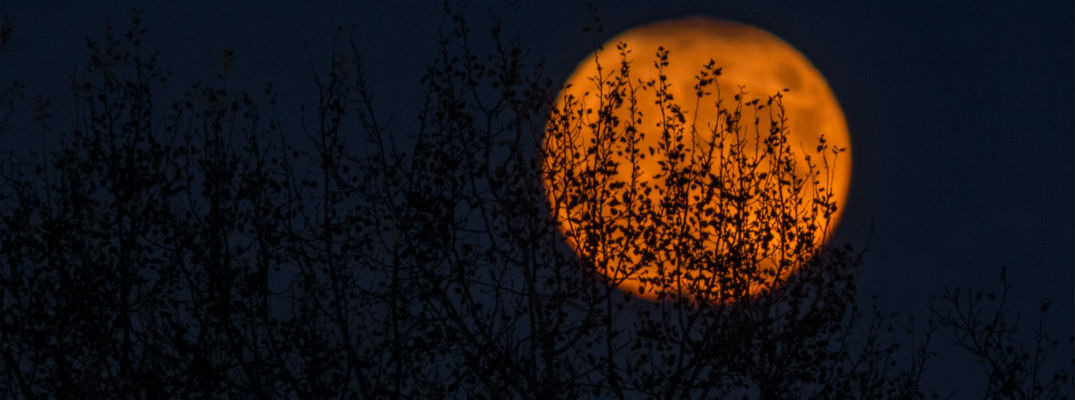 A stock photo of a moon behind some trees.