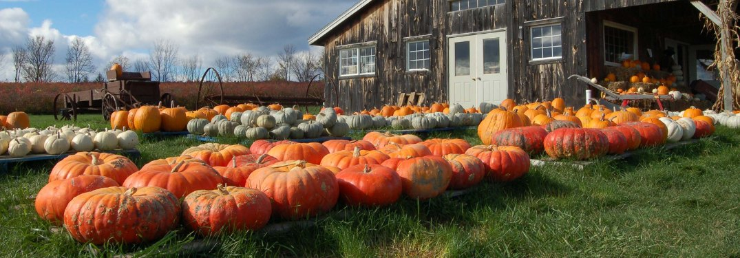 Close up of pumpkins in front of a barn