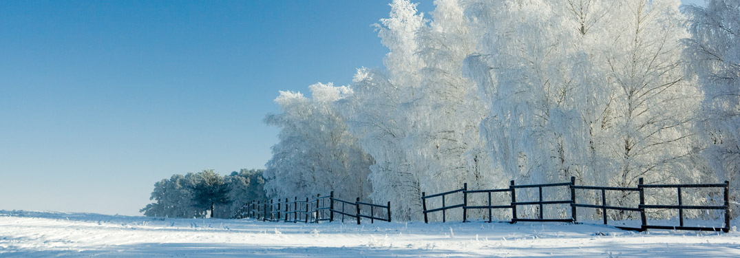 Winter scene with snow-covered trees during daytime