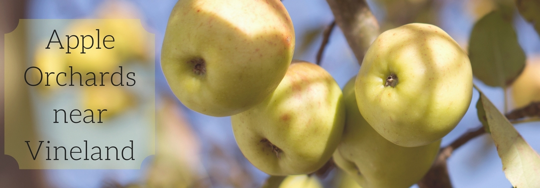 Celebrate Fall at these Local Apple Orchards near Vineland!