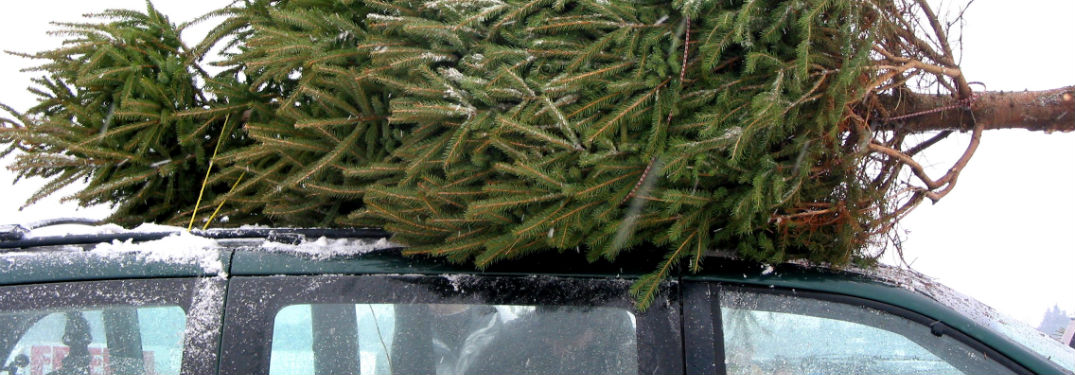 Christmas Tree Farms near Attleboro, MA with image of a Christmas tree attached to the roof of a vehicle