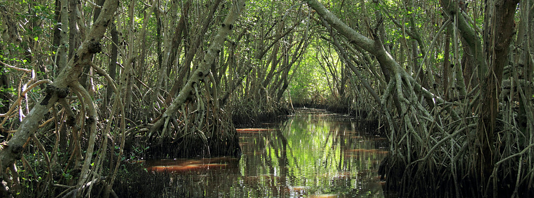 Swampy area in the Everglades National Park