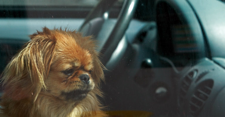 a sad dog in the passenger seat of a car