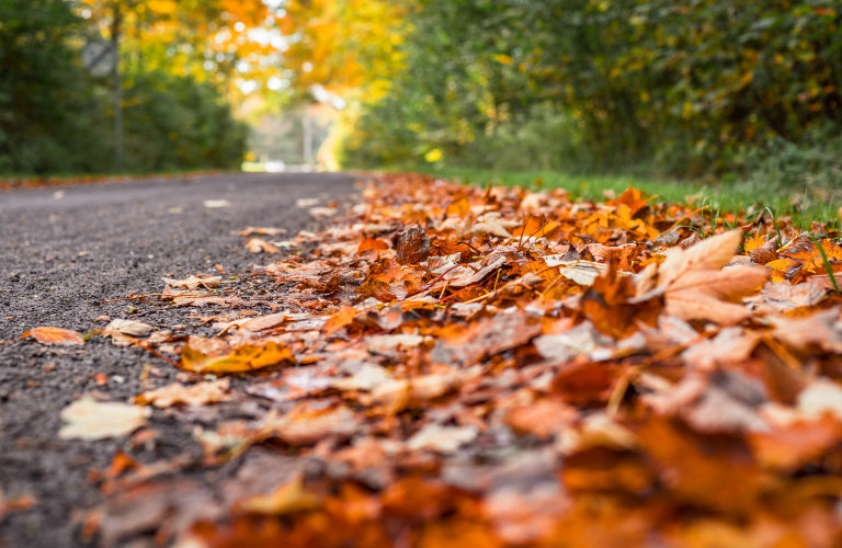 piled leaves on the side of the road
