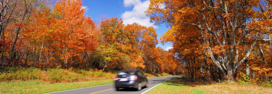 A car zooms through a beautiful autumn environment