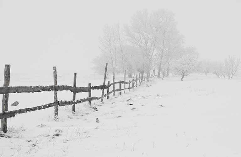 View of a fence and trees covered by snow just after a snowstorm
