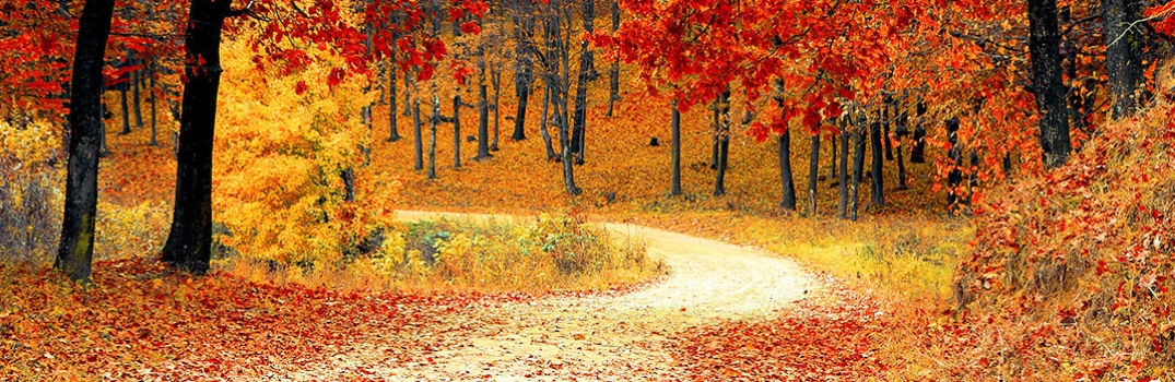 Road in a fall setting