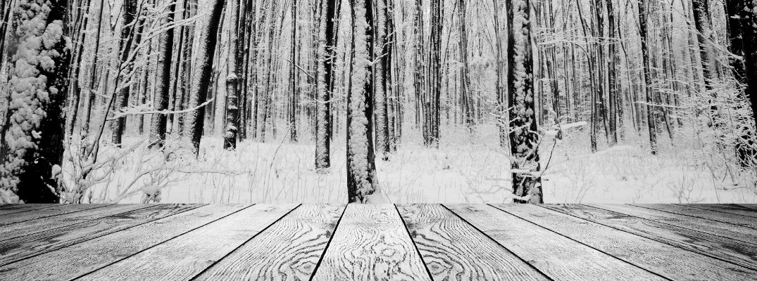 View of snow-covered trees from a wood deck