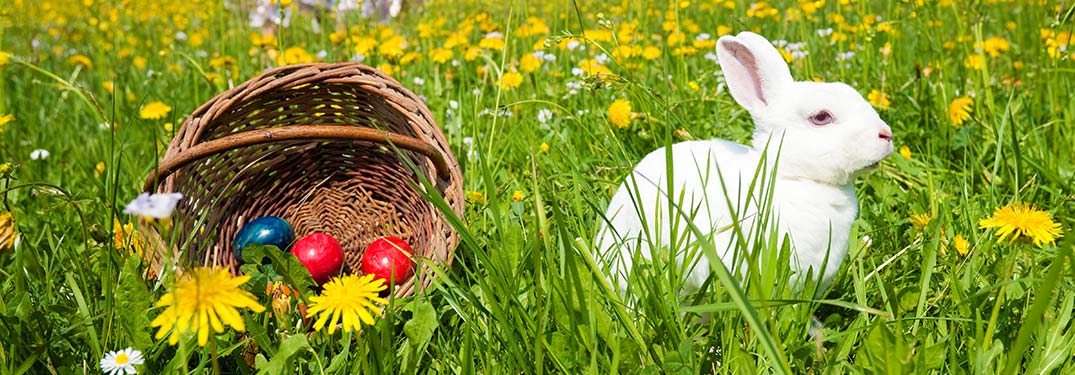 Bunny in a field next to an Easter basket