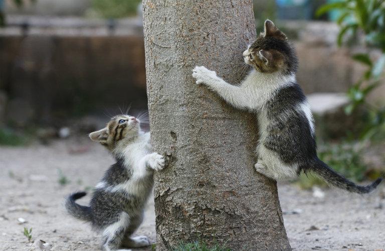 two cats climbing a tree