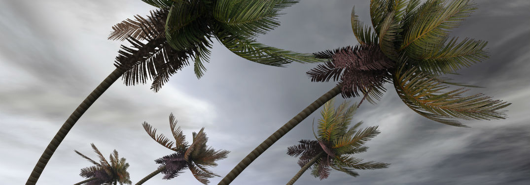 Hurricane Preparedness Plan with image of palm trees being blown by strong winds