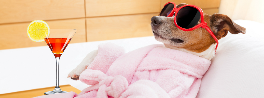 5 Tips and Tricks to Keep your Pet Cool This Summer Dog Relaxing