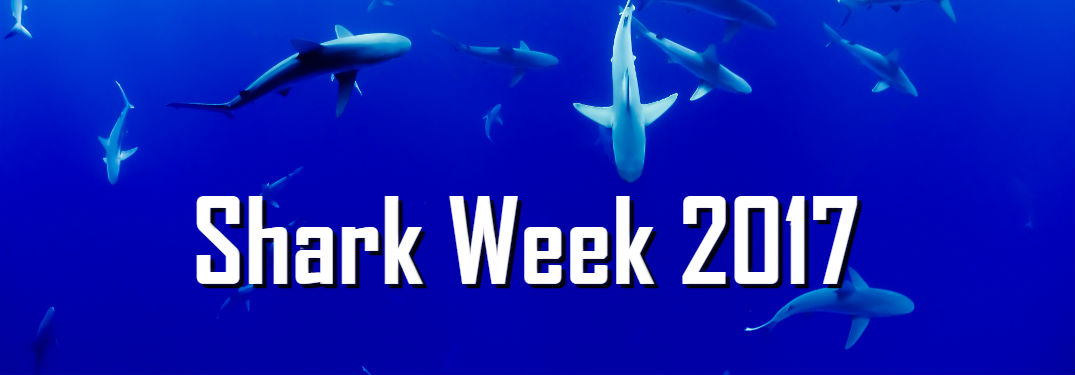 Shark Week 2017 Daily Programming Schedule Listed Here