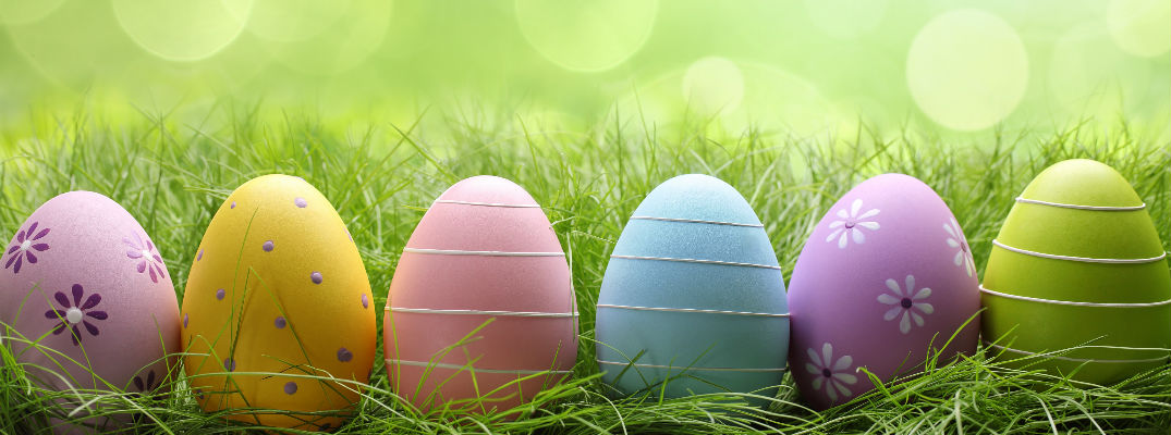 Row of various colored Easter eggs in front of green grass