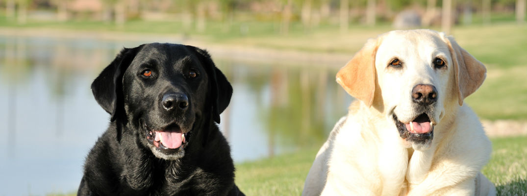 Best Dog Parks and Dog Trails in Houston TX - Yellow and ...