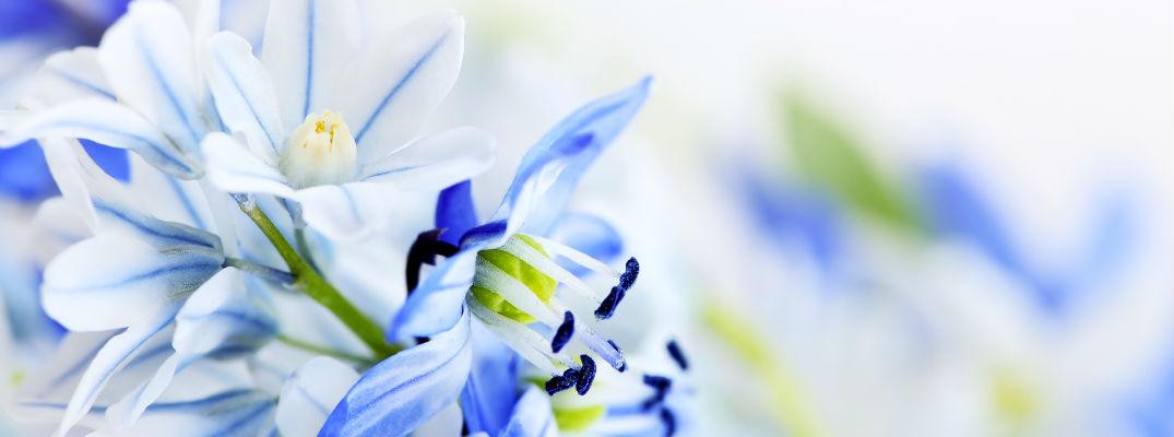 Pretty blue flowers - 2017 May Events and Festivals in Edmonton AB