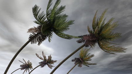 palm tress blowing over in the wind