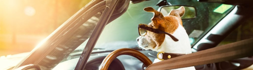 A dog in the driver's seat