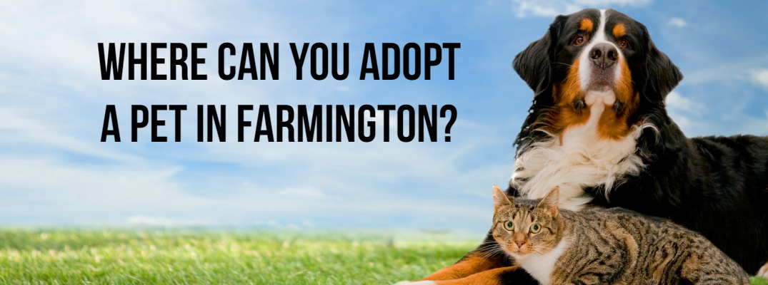 Where Can You Adopt a Pet in Farmington?