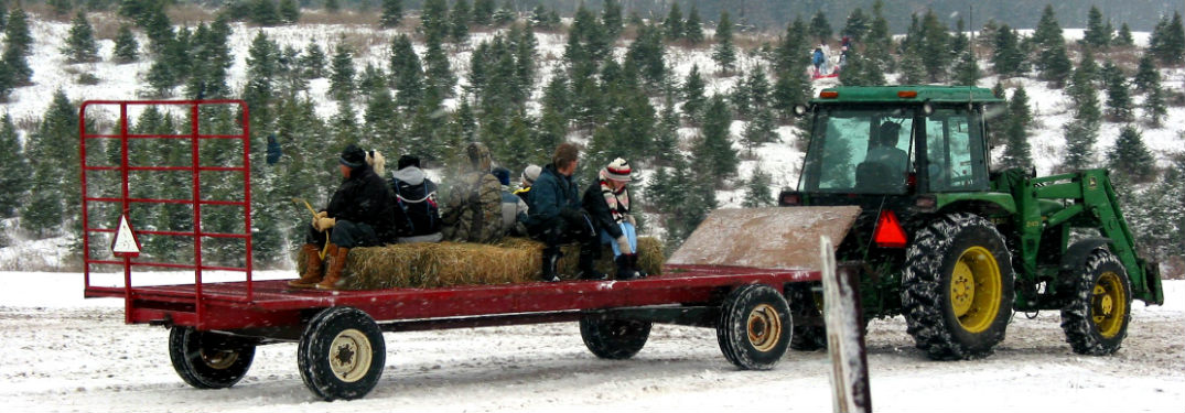 tractor pulling a trailer at a Christmas tree farm in winter