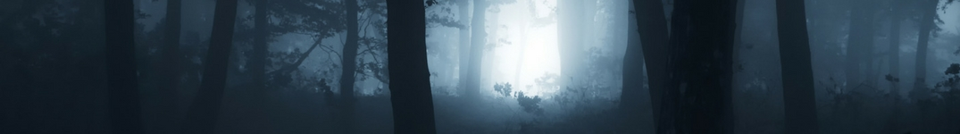 Haunted Foggy Forest