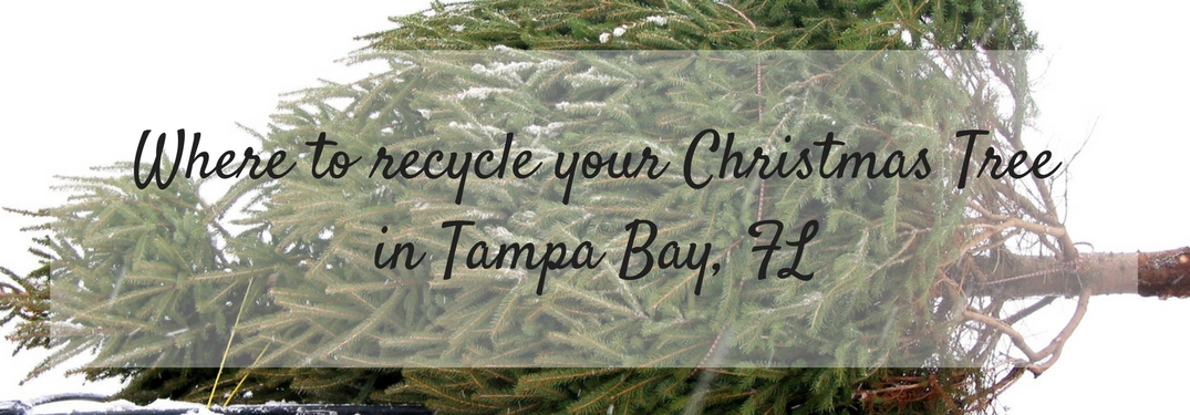 Text reading Where to Recycle your Christmas Tree in Tampa Bay, FL overlaid on an image of a tree on top of a car