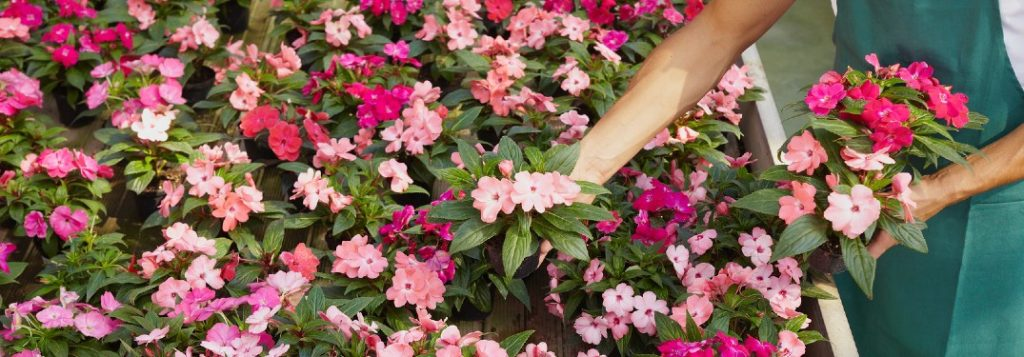 Close up of a florist placing flowers next to other flowers