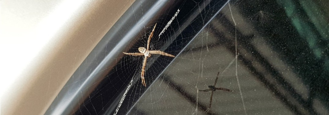 A spider sitting on a web on the window of a car