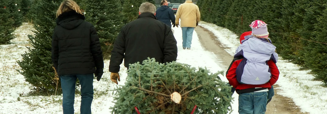 family hauling a Christmas tree from a tree farm in winter