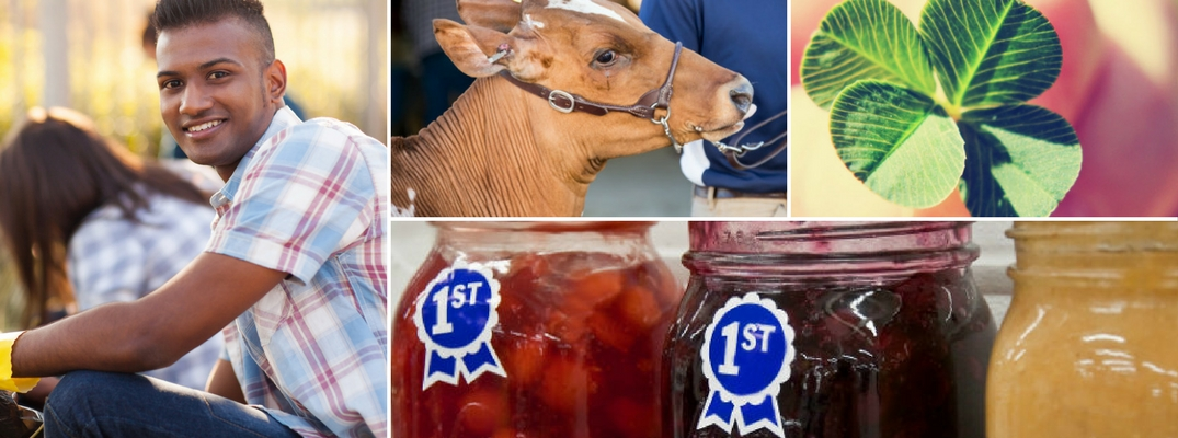 Collage featuring various aspects of 4-H
