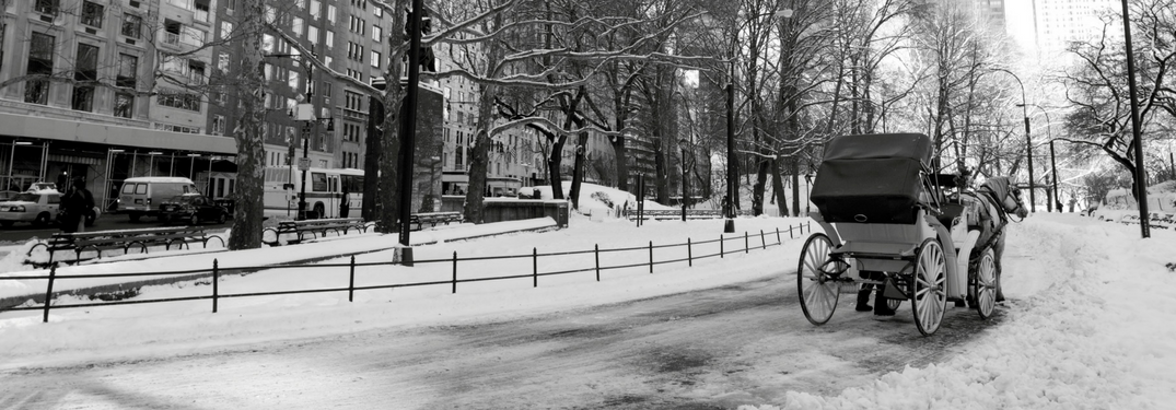 Horse carriage in park in city during winter
