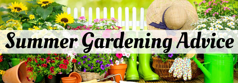 Summer Gardening Advice on a garden-themed background