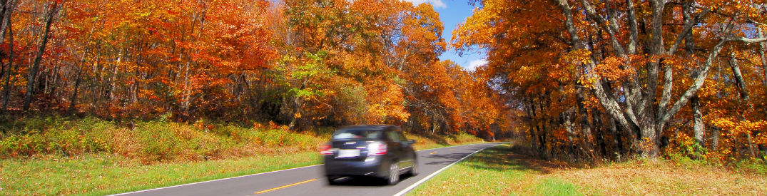 Sleepy Hollow Auto >> Colorful Leaves Fall Around Car On Tree Lined Road B
