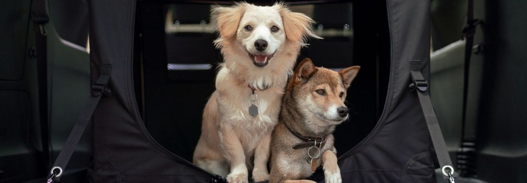 two dogs inside a Mopar kennel in the 2019 Chrysler Pacifica