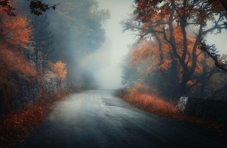 Fogged road in fall